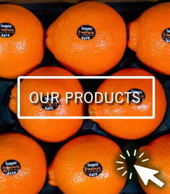 Venus Citrus Products